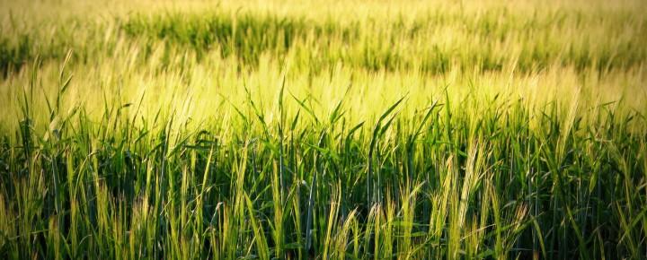 Transformation der globalen Landwirtschaft