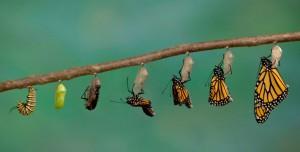 metamorfosis-de-las-mariposas
